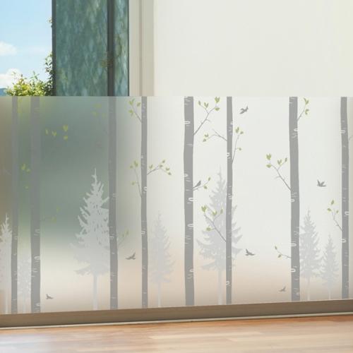 dgse369-자작나무 숲-반투명시트지