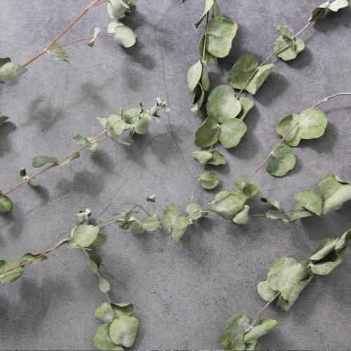 유칼립투스 드라이플라워 1묶음 소량판매/그린잎 구니 프리저브드 가랜드