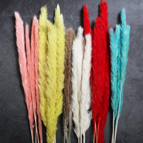 미니 팜파스 드라이플라워 소량판매 약 5송이/1묶음/6컬러 깃털