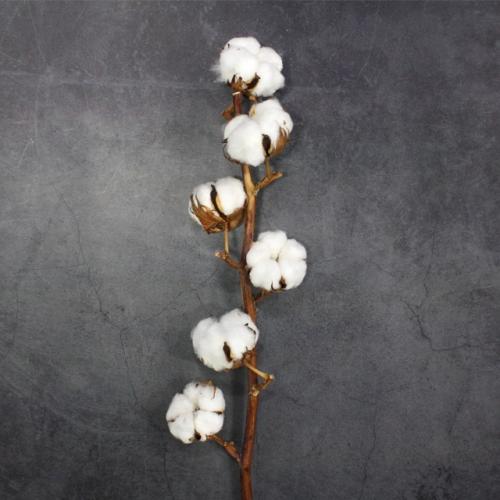 목화 드라이플라워 꽃병용 가지/6송이 묶음/줄기생화