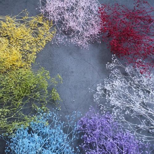 프리저브드 구슬 미니안개꽃 소량/드라이플라워 하바리움 재료 보존화