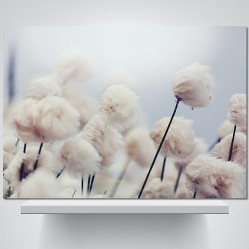 코튼 플라워 - 감성사진 폼보드 액자