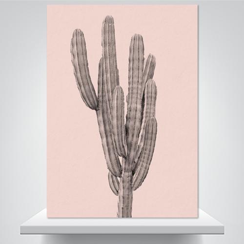 핑크 선인장 - 50g 폼보드 액자